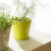 plant-rimab